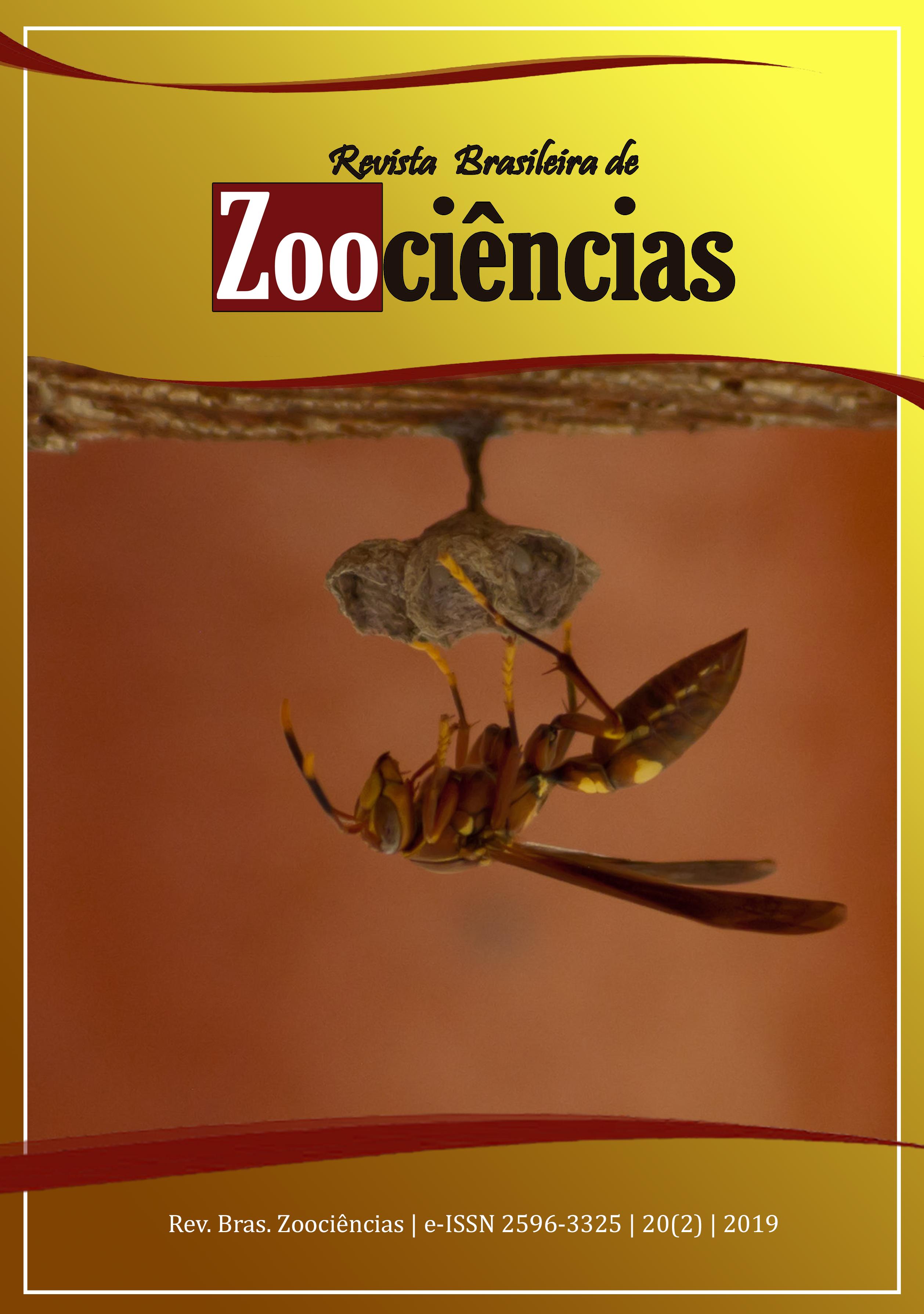 Espécime de Polistes simillimus, autoria de Bruno Corrêa Barbosa