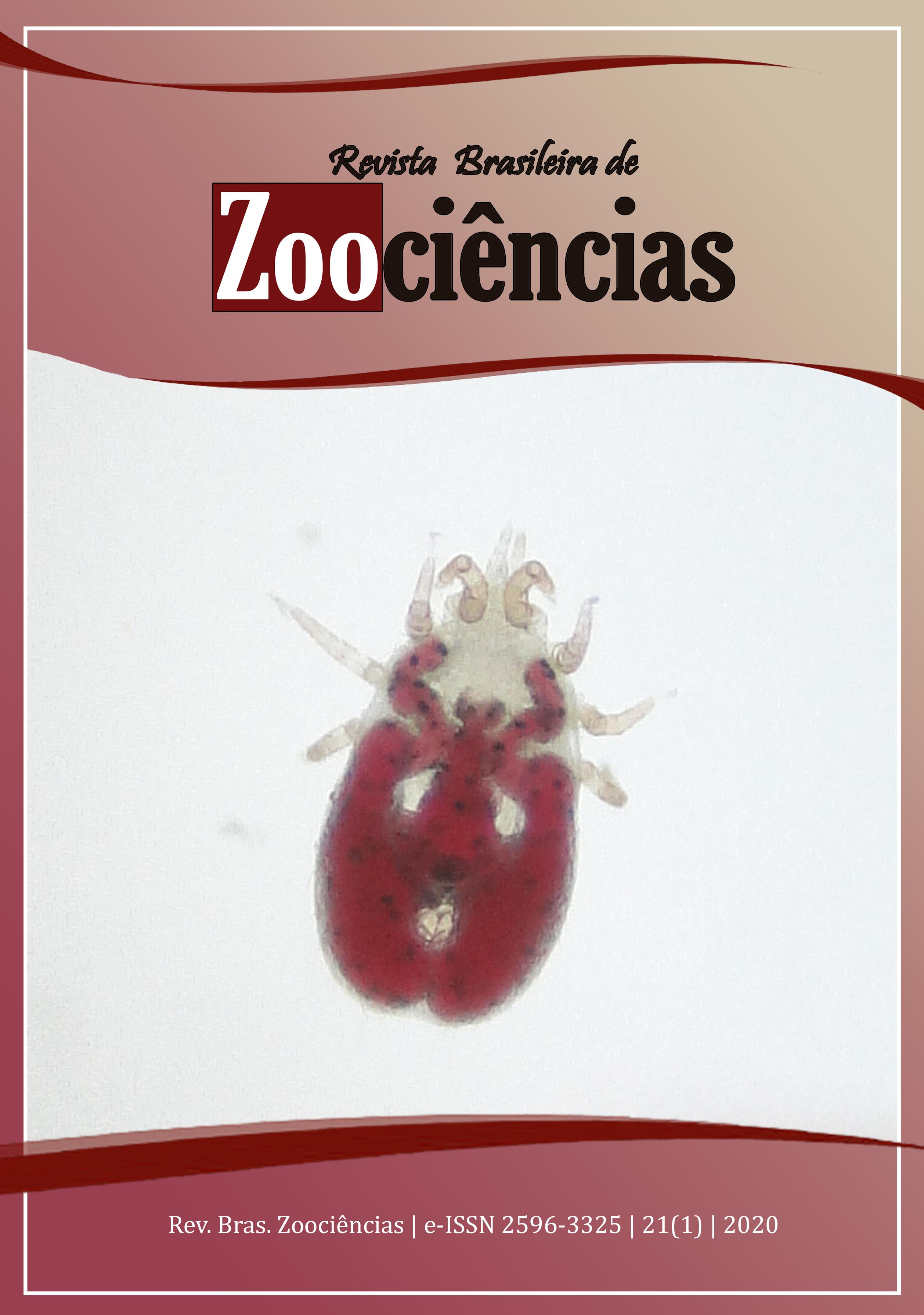 Espécime de Pellonyssus reedi (Zump & Patterson, 1952), autoria de Paulo Roberto Silveira dos Santos